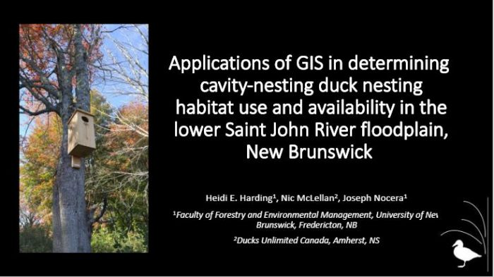 Presentation title slide: Applications of GIS in determining cavity-nesting ducks nesting habitat use