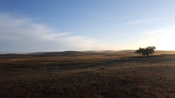 A prairie landscape with a single tree